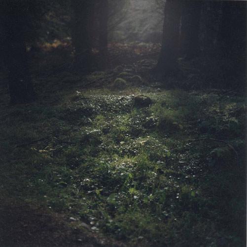 daniel-gustav-cramer-woodland-04-domobaal