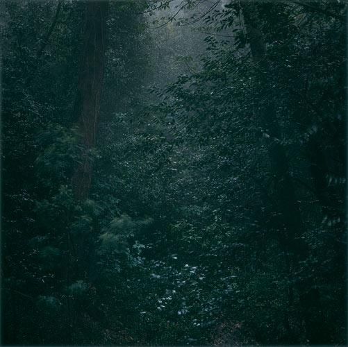 daniel-gustav-cramer-woodland-42-domobaal